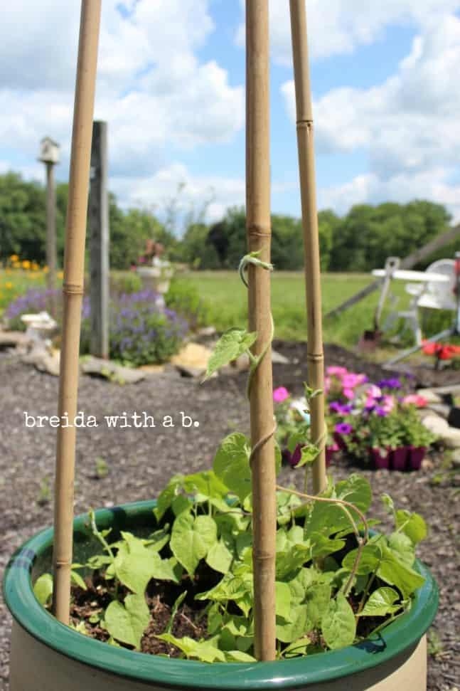 Morning Glory DIY Trellis from Breida with a B blog