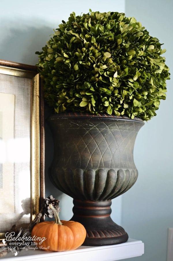 Boxwood ball topiary, fall decor ideas, autumn decorating
