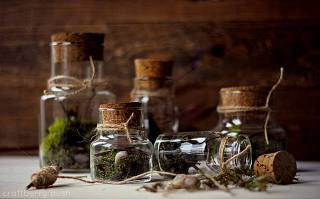 mini terrariums from craftberry bush