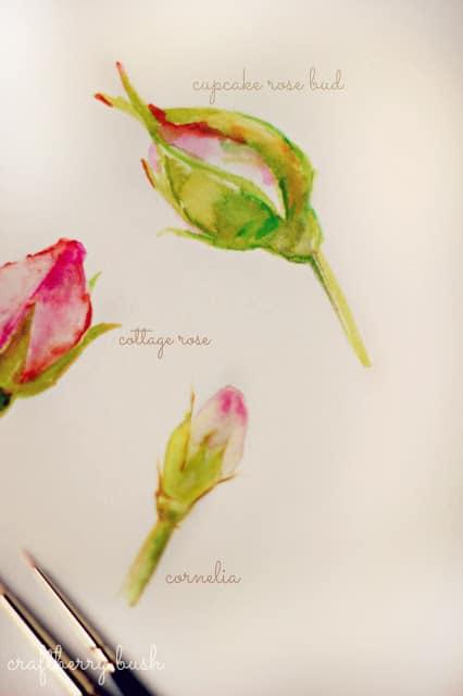 rosebud Watercolor from Craftberry Bush