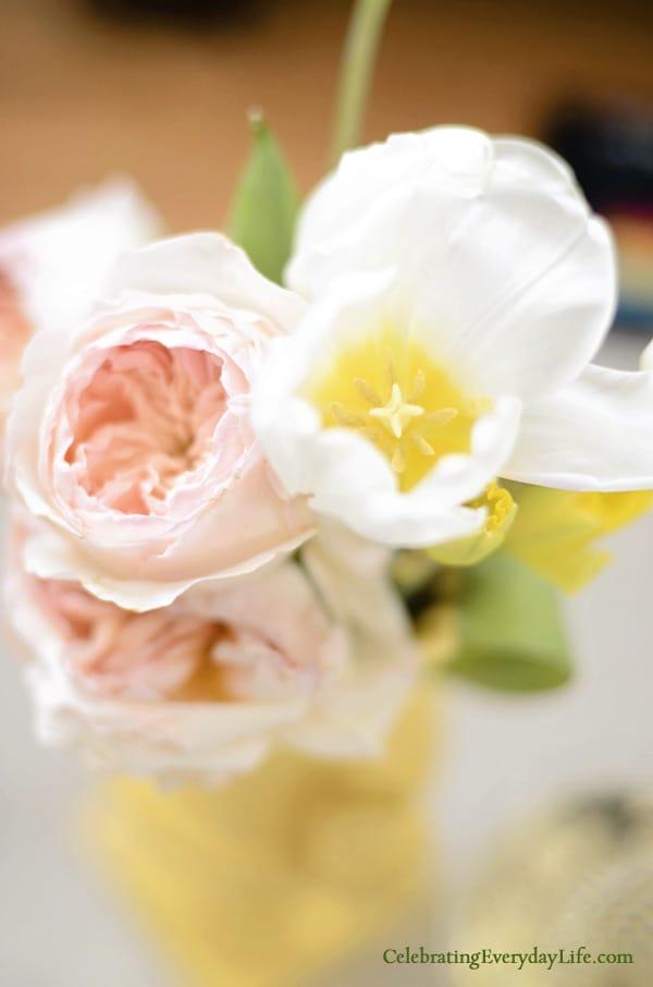 Tulip Bloom, Cabbage Rose