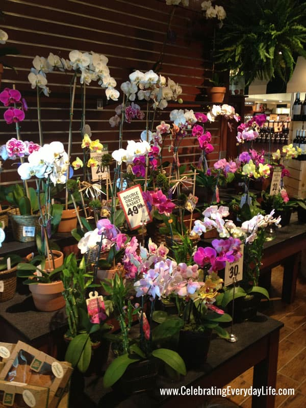 Orchids at the Fresh Market