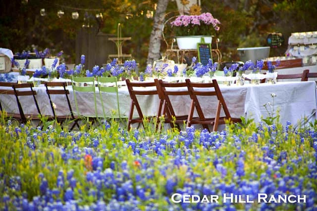 Wildflower Party on Cedar Hill Ranch blog
