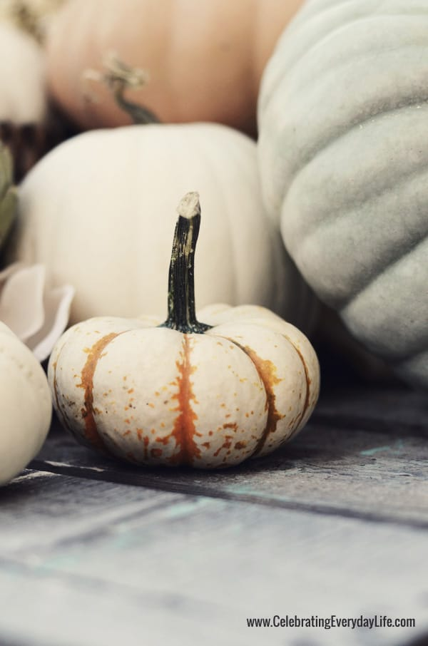 Fantasy Pumpkins, Tiger Stripe mini pumpkins, Celebrating Everyday Life with Jennifer Carroll
