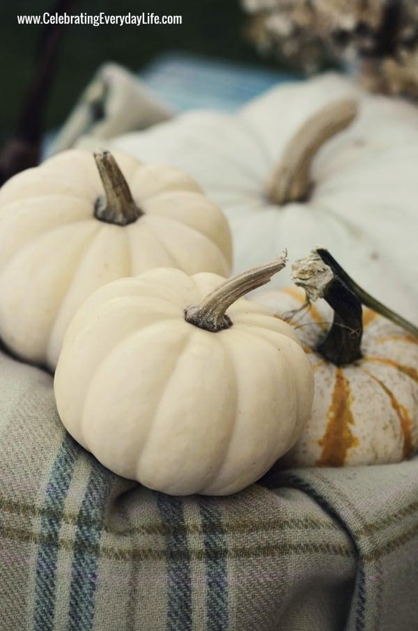 Fantasy Pumpkins, mini baby boos, Tiger Stripe mini pumpkins, Celebrating Everyday Life with Jennifer Carroll