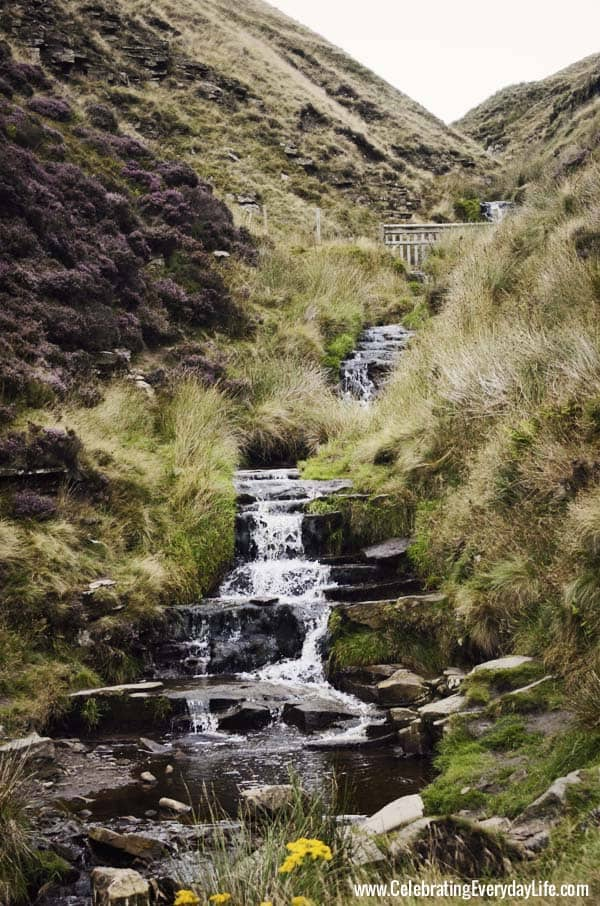 Waterfall on the moors, Heather on the English Moors, Celebrating Everyday Life with Jennifer Carroll