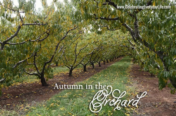 Autumn in the Orchard… A field trip