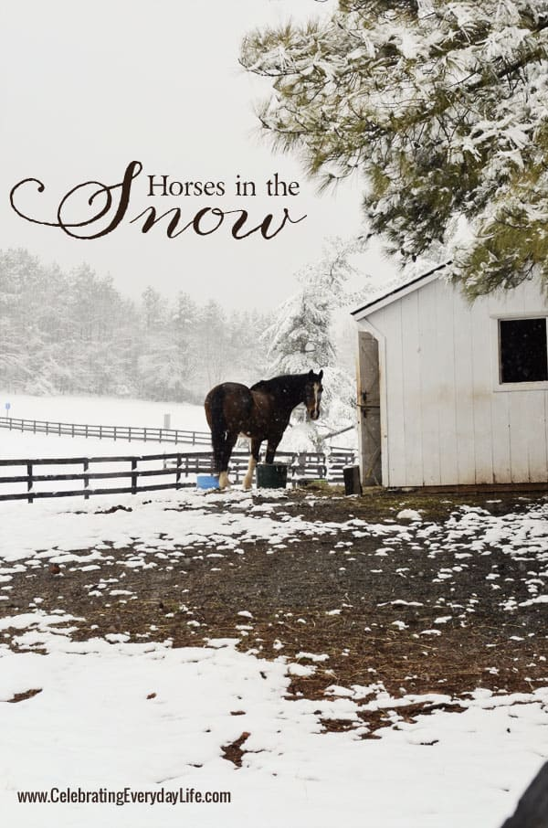Horses in the snow, Celebrating Everyday Life with Jennifer Carroll, www.CelebratingEverydayLife.com
