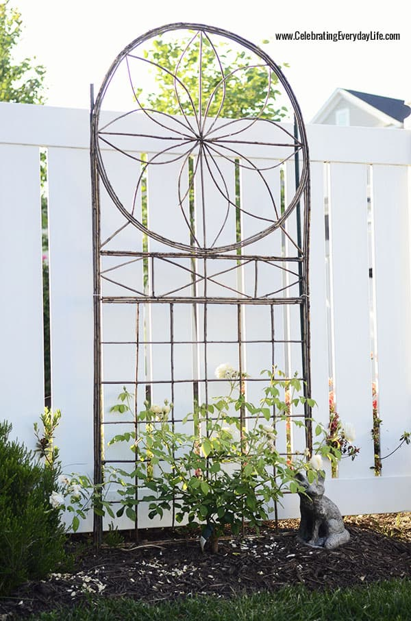 Willow trellis, climbing David Austin Roses, Celebrating Everyday Life with Jennifer Carroll