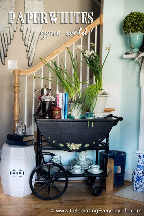 Tea Cart decor, Paperwhite plants, Planting paperwhites, Celebrating Everyday Life with Jennifer Carroll