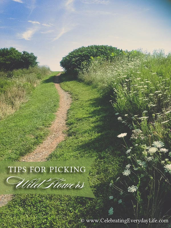 Tips for Picking Wild Flowers, Path Photo, Picking Wild Flowers, Foraging flowers, Celebrating Everyday Life with Jennifer Carroll
