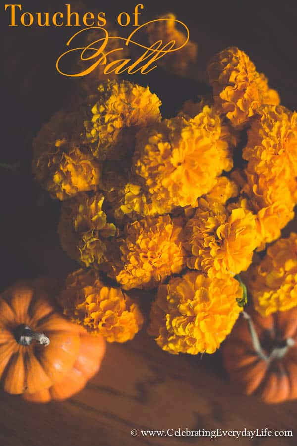 Fall Marigolds, Touches of Fall, Touches of Fall Decor, Celebrating Everyday Life with Jennifer Carroll