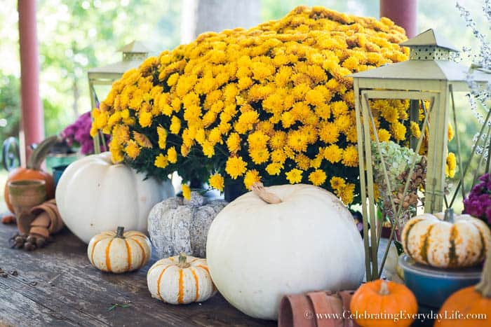 potting shed inspired vignette, potting shed inspired decor, potting shed decor, fall mums, fall vignette, fall porch decor, fall patio decor, outdoor fall decor, decorating for fall, Celebrating Everyday Life with Jennifer Carroll