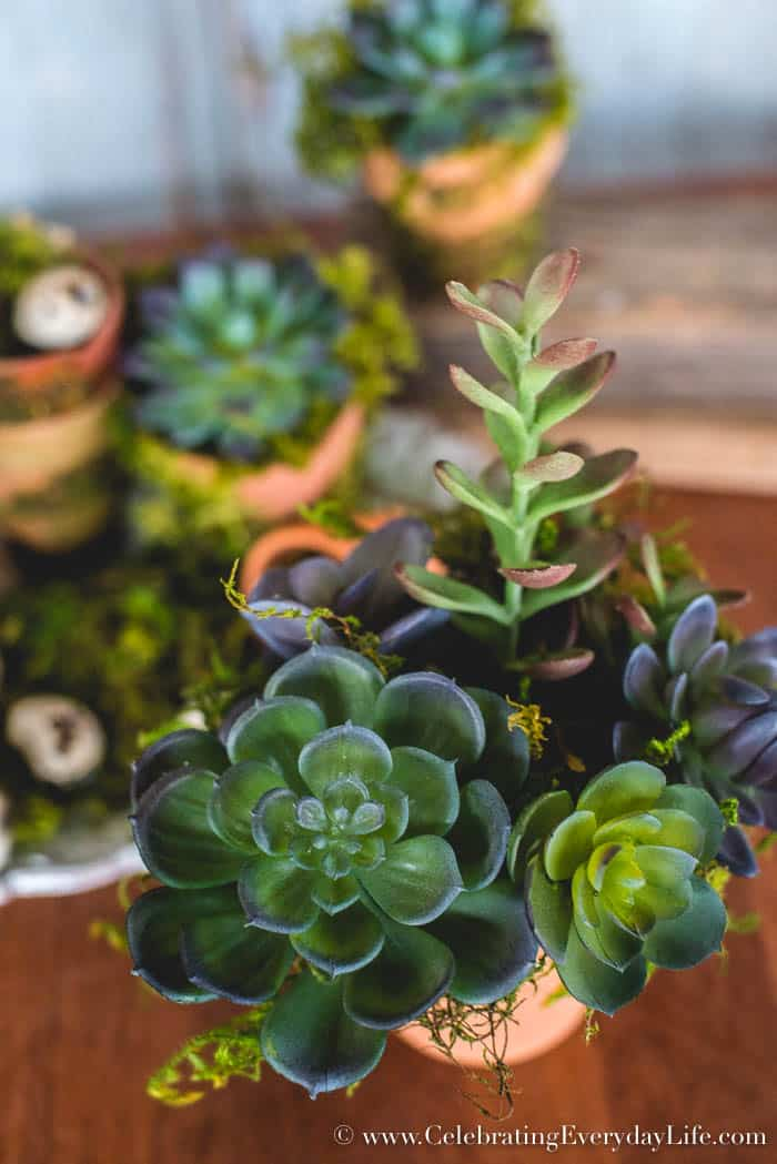 Create this Simple Potted Succulent Arrangement for under $5! | CelebratingEverydayLife.com