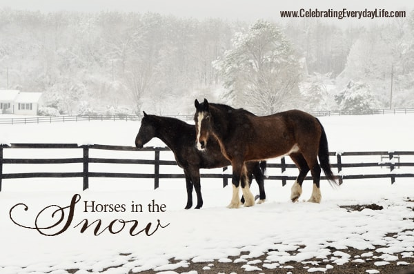 Horses in the Snow {A photo field trip}