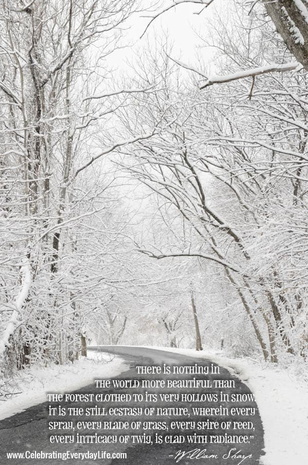 A Snowy Road, Snow Scene, Snow in the Woods, Inspiring Snow Quote, William Sharp Quote, Inspiring Winter Quote, Celebrating Everyday Life with Jennifer Carroll, www.CelebratingEverydayLife.com