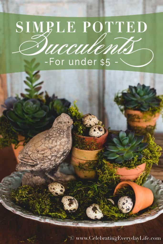Simple Succulent Arrangement for under $5